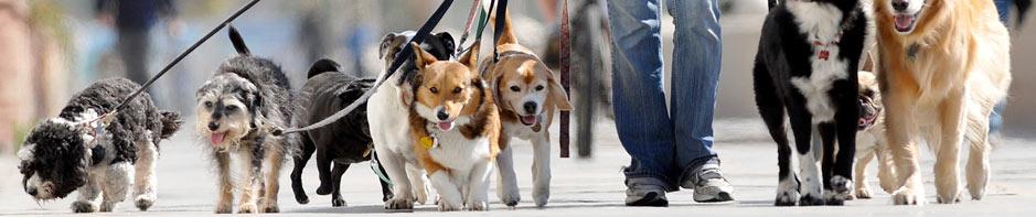 dogsfidel-dogsitter